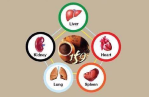 159 benefit for five organs-159meal.com